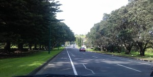 Tree lined drive to Devonport (one lane both ways all the way, gets really congested during peak traffic time)