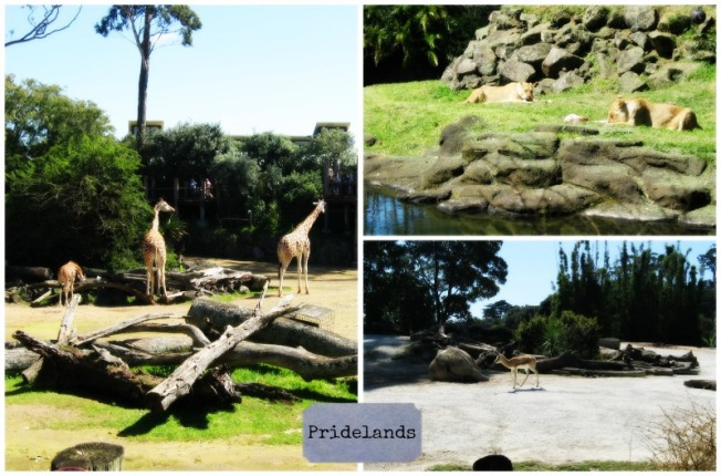 Auckland Zoo Prideland